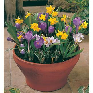 Large picture of Spring-flowering bulbs